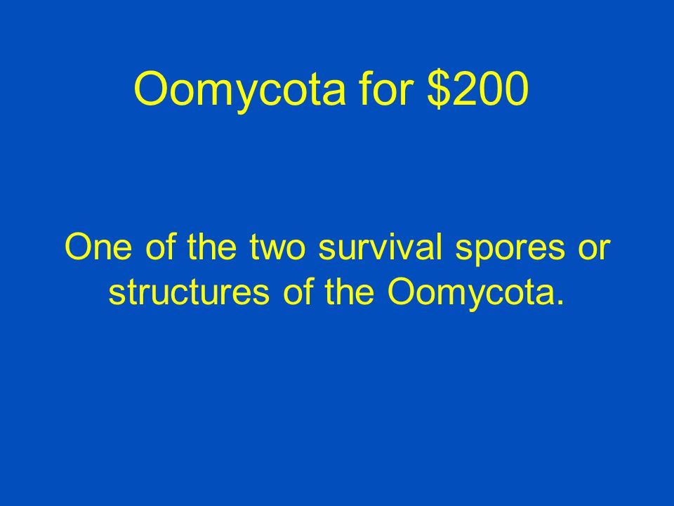 One of the two survival spores or structures of the Oomycota.