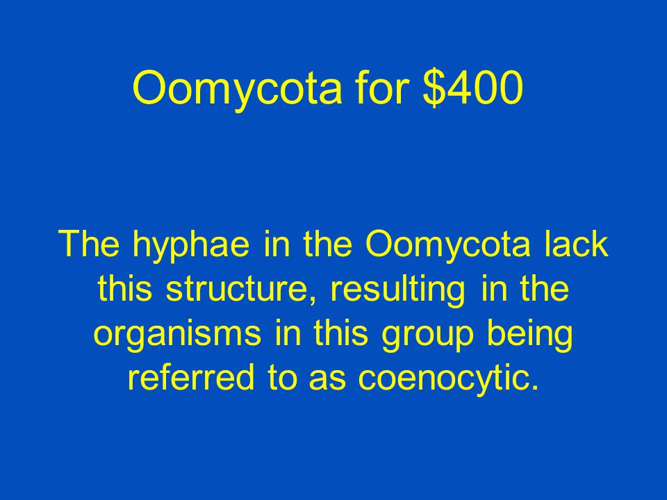 Oomycota for $400 The hyphae in the Oomycota lack this structure, resulting in the organisms in this group being referred to as coenocytic.