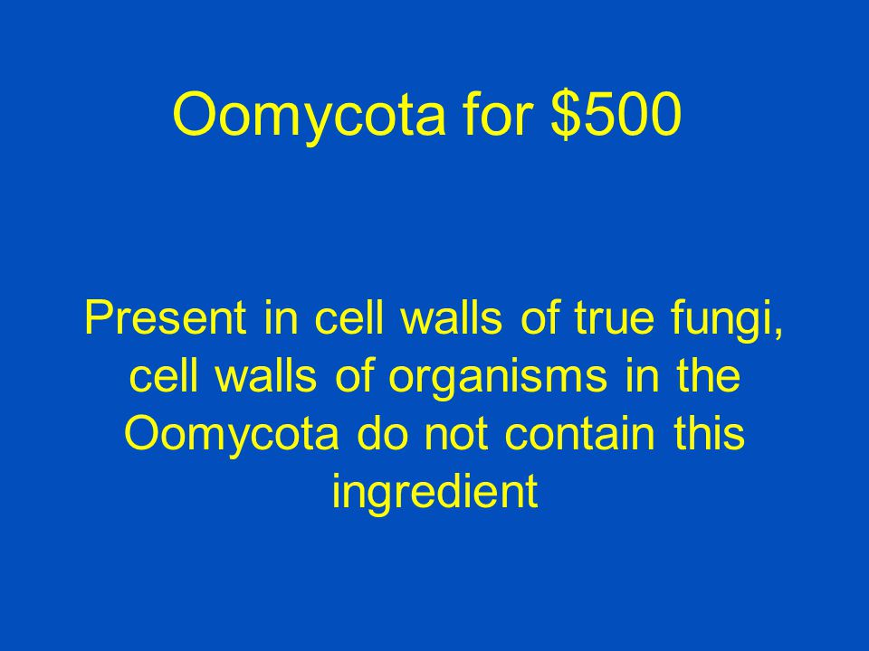 Oomycota for $500 Present in cell walls of true fungi, cell walls of organisms in the Oomycota do not contain this ingredient.