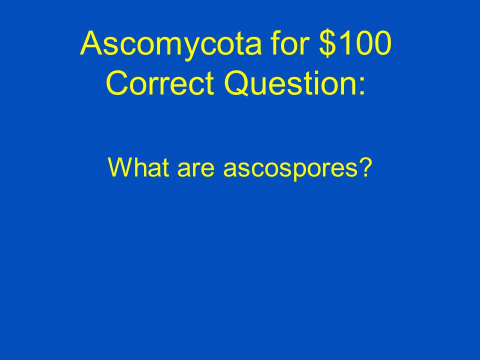 Ascomycota for $100 Correct Question: