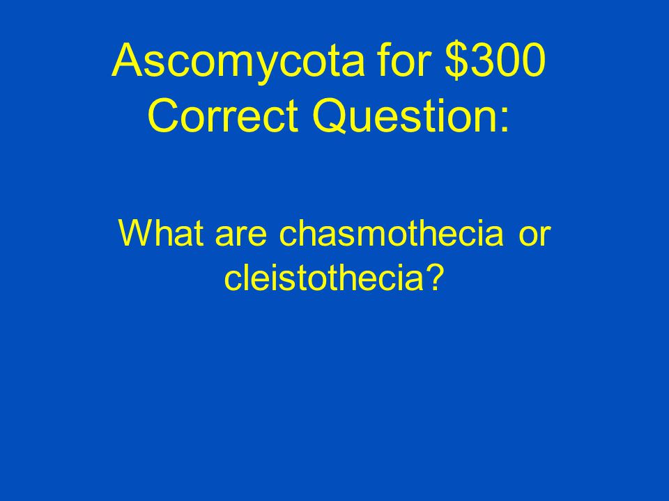 Ascomycota for $300 Correct Question: