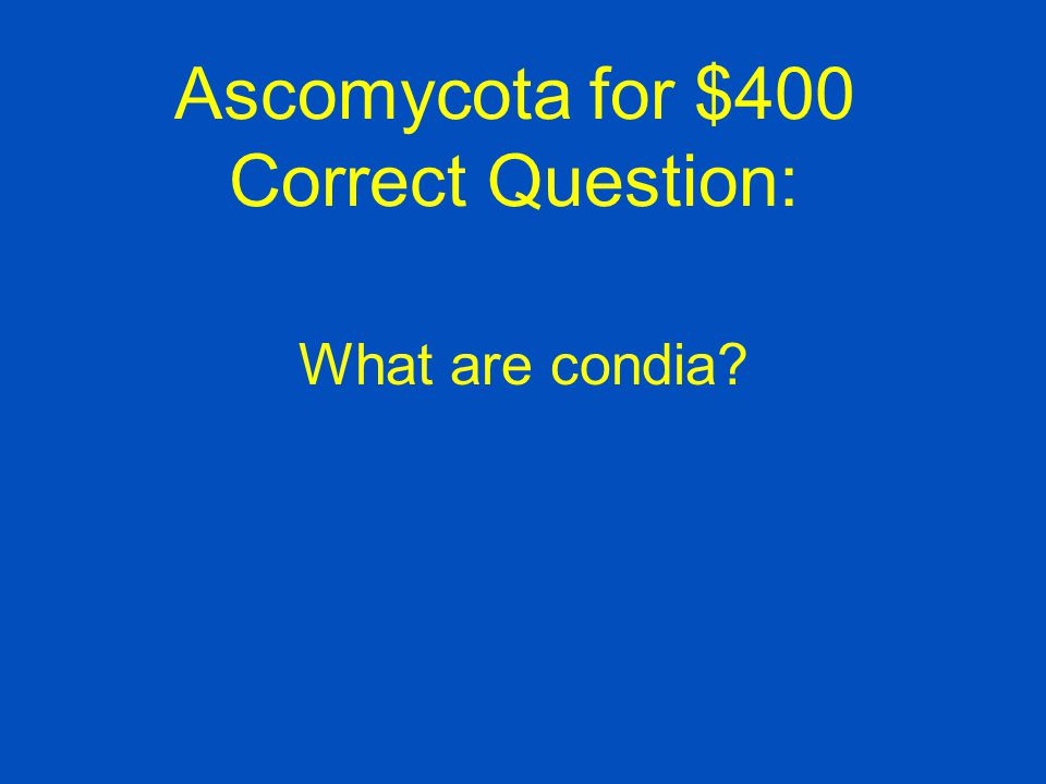 Ascomycota for $400 Correct Question: