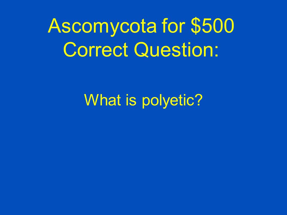 Ascomycota for $500 Correct Question:
