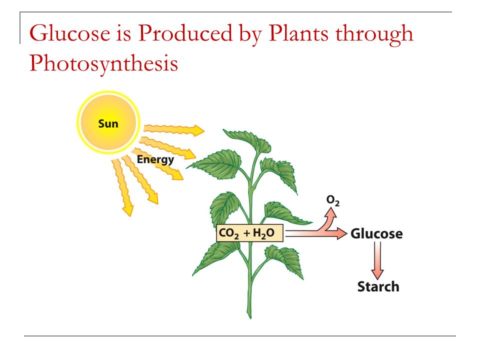 Glucose is Produced by Plants through Photosynthesis