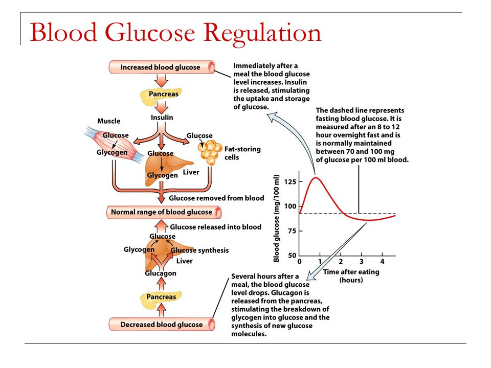 blood glucose regulation lab essay If blood glucose levels fall below normal diseases and blood sugar regulation glucose levels above or below the normal range are indicative of the presence.