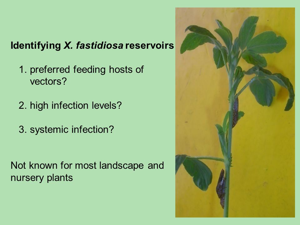 Identifying X. fastidiosa reservoirs