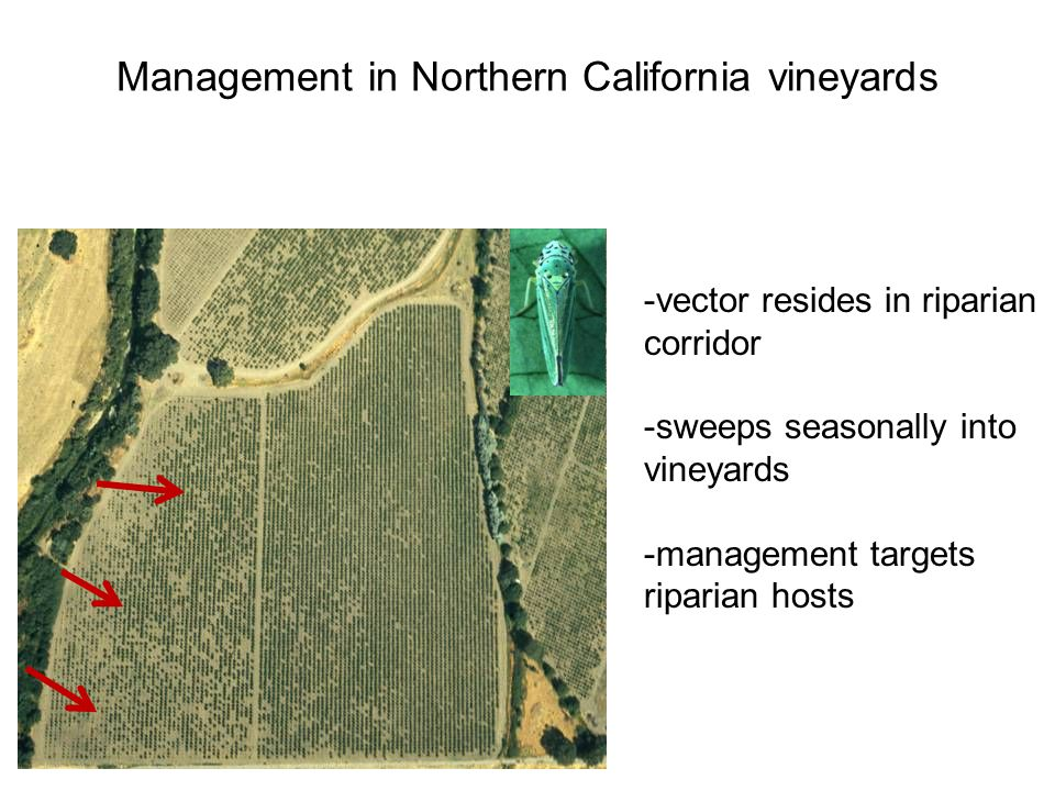 Management in Northern California vineyards