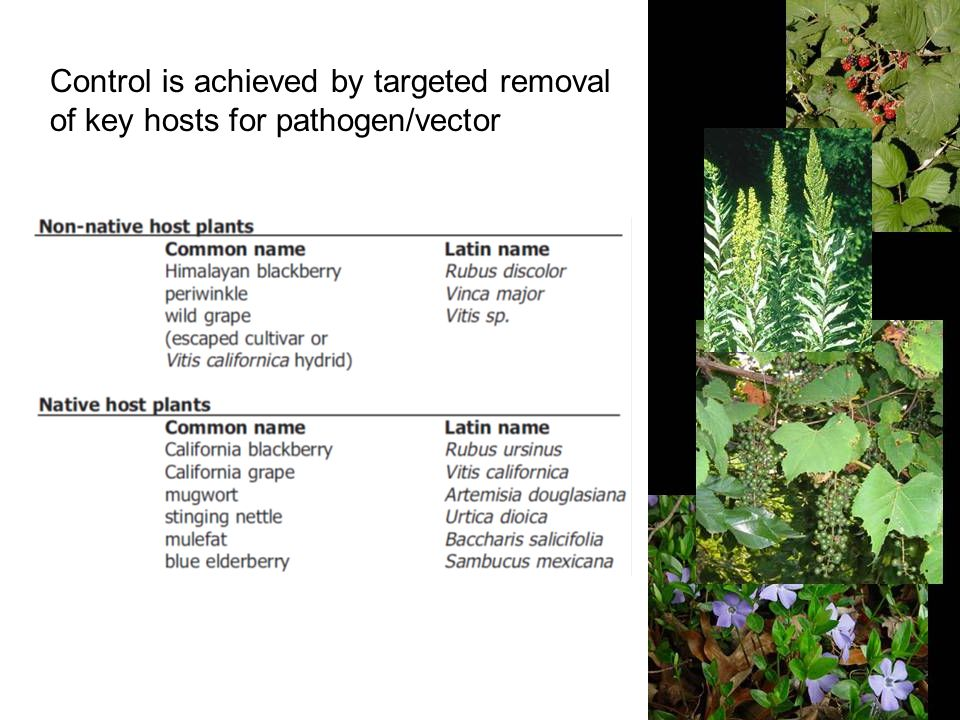Control is achieved by targeted removal of key hosts for pathogen/vector