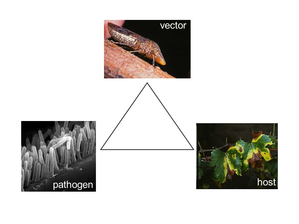 vector host pathogen