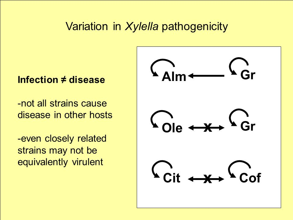 Variation in Xylella pathogenicity