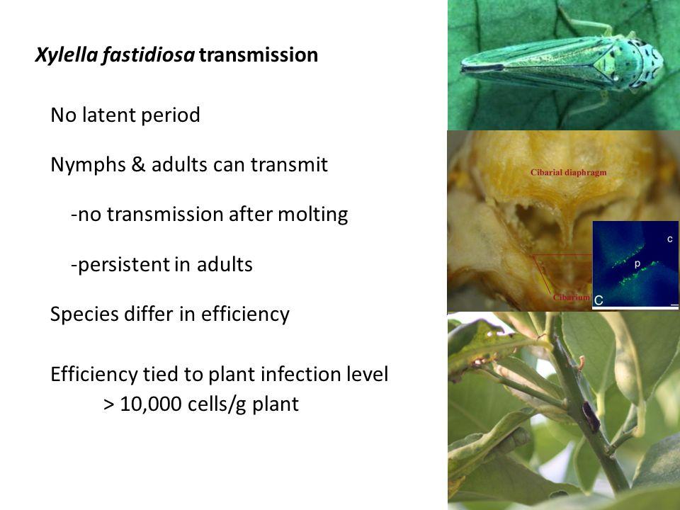 Xylella fastidiosa transmission