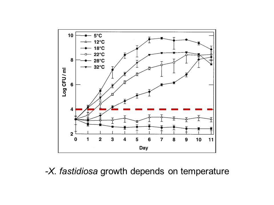 -X. fastidiosa growth depends on temperature