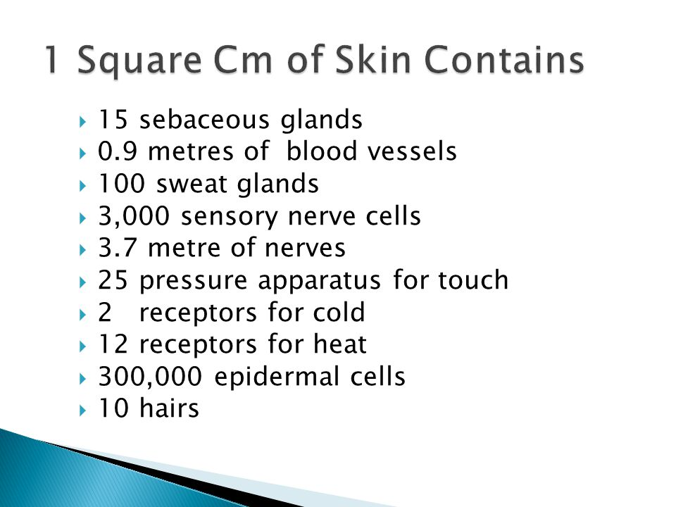 1 Square Cm of Skin Contains