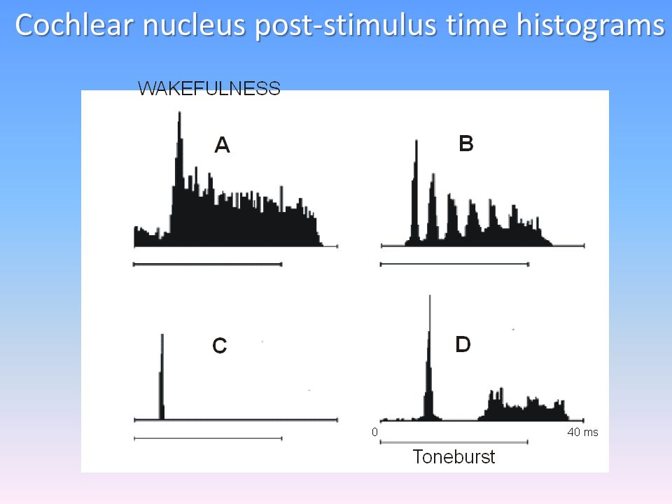 Cochlear nucleus post-stimulus time histograms