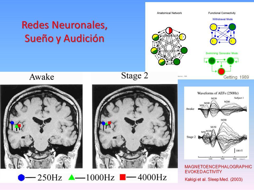 Redes Neuronales, Sueño y Audición