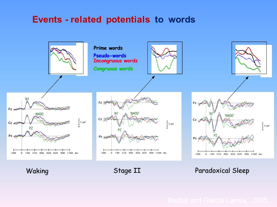 Events - related potentials to words