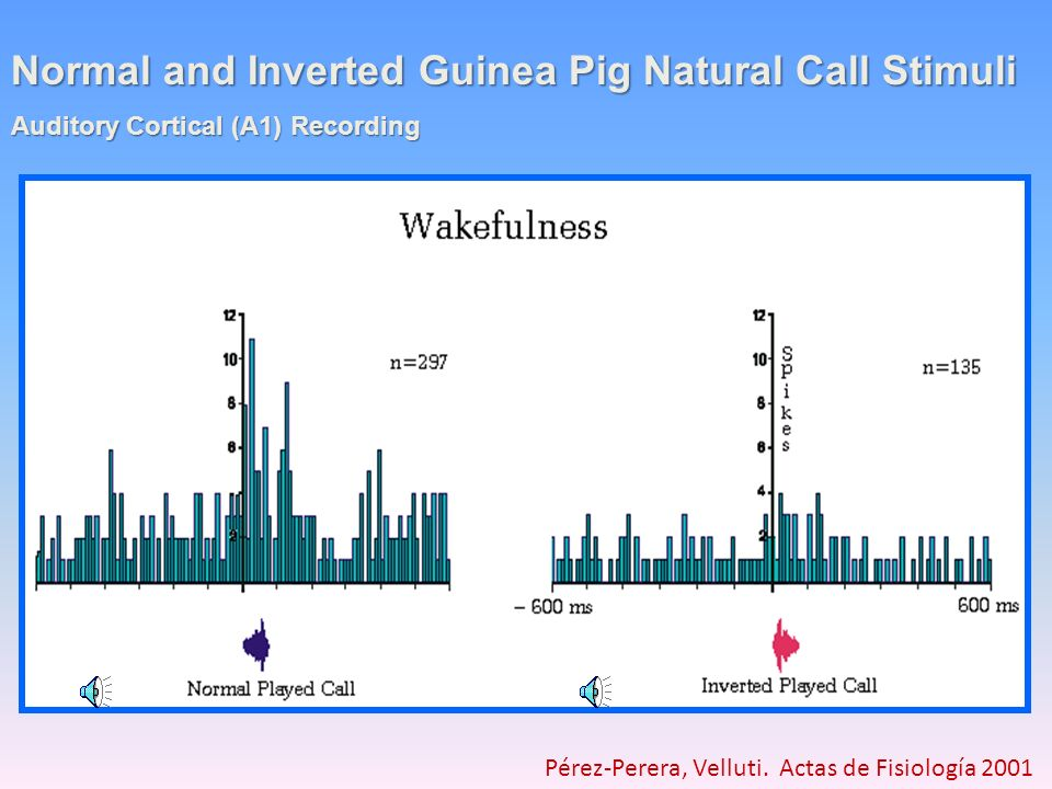 Normal and Inverted Guinea Pig Natural Call Stimuli