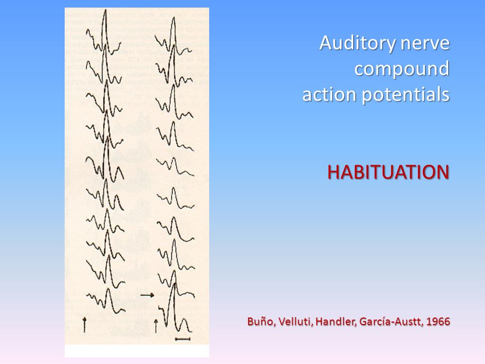 Auditory nerve compound action potentials HABITUATION