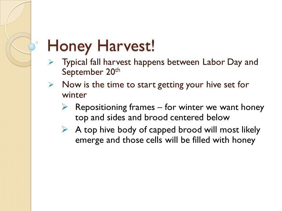 Honey Harvest! Typical fall harvest happens between Labor Day and September 20th. Now is the time to start getting your hive set for winter.