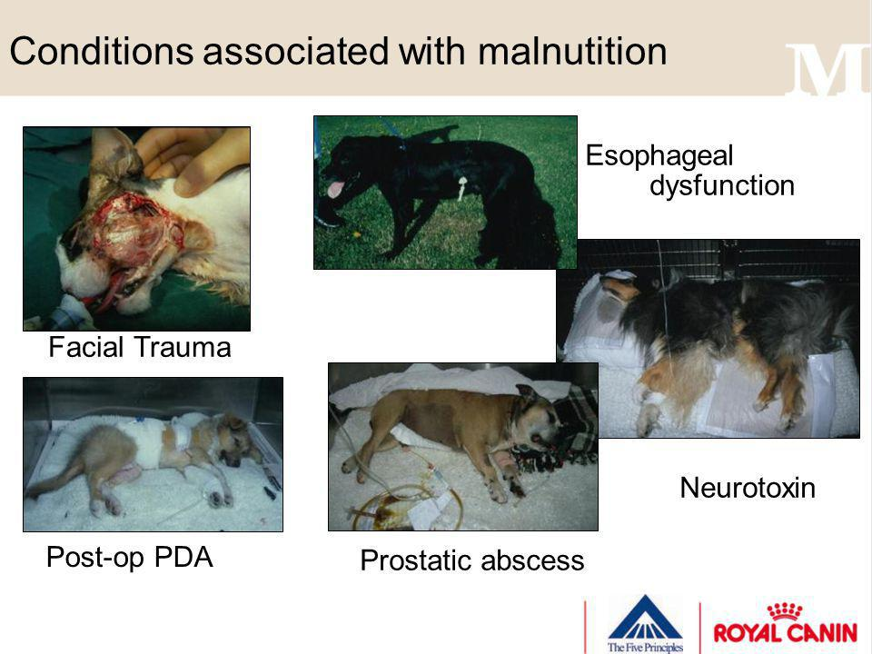 Conditions associated with malnutition