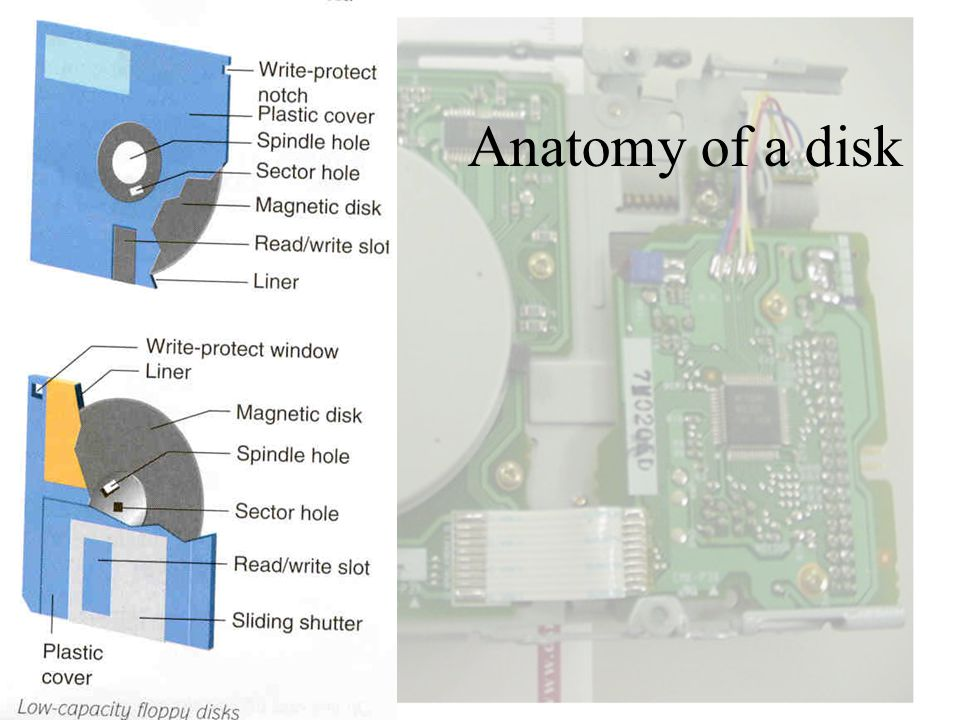 Anatomy of a disk