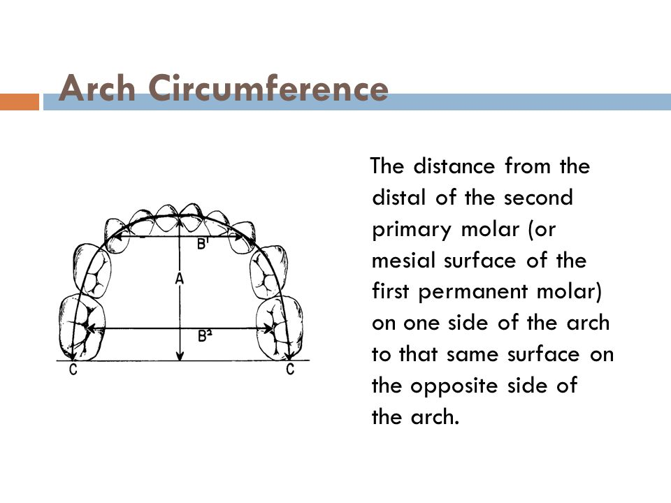 Arch Circumference