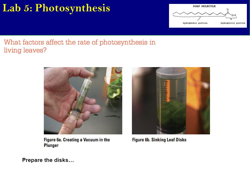 Lab 5: Photosynthesis Prepare the disks…