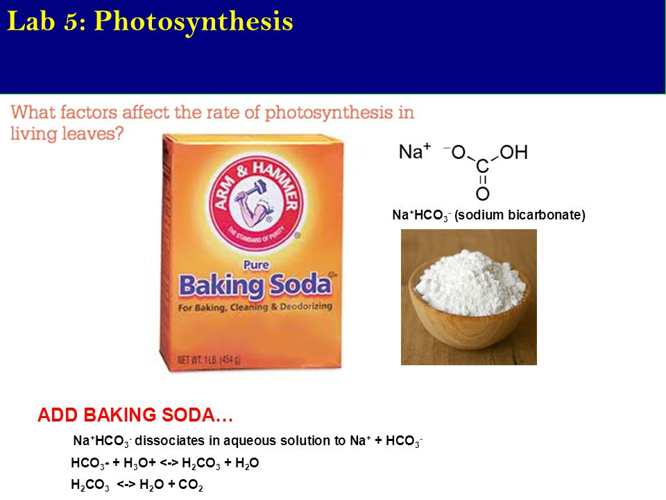 Lab 5: Photosynthesis ADD BAKING SODA… Na+HCO3- (sodium bicarbonate)