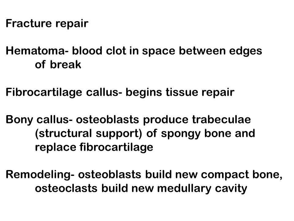 Fracture repair Hematoma- blood clot in space between edges. of break. Fibrocartilage callus- begins tissue repair.