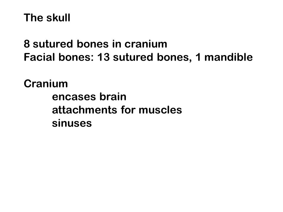 The skull 8 sutured bones in cranium. Facial bones: 13 sutured bones, 1 mandible. Cranium. encases brain.