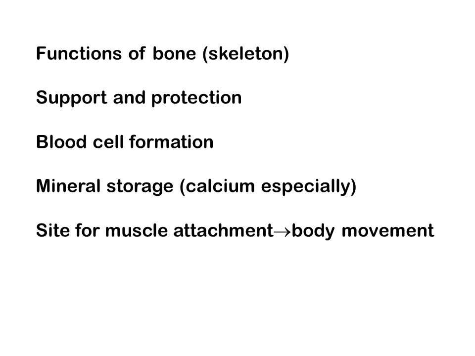 Functions of bone (skeleton)