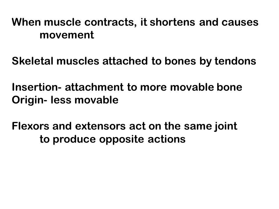When muscle contracts, it shortens and causes