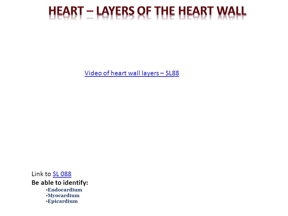 Heart – LAYERS OF THE HEART WALL