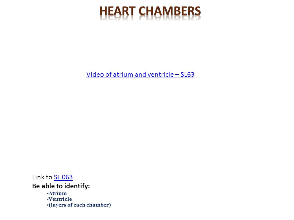 Heart CHambers Video of atrium and ventricle – SL63 Link to SL 063