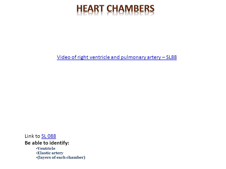 Heart CHambers Video of right ventricle and pulmonary artery – SL88