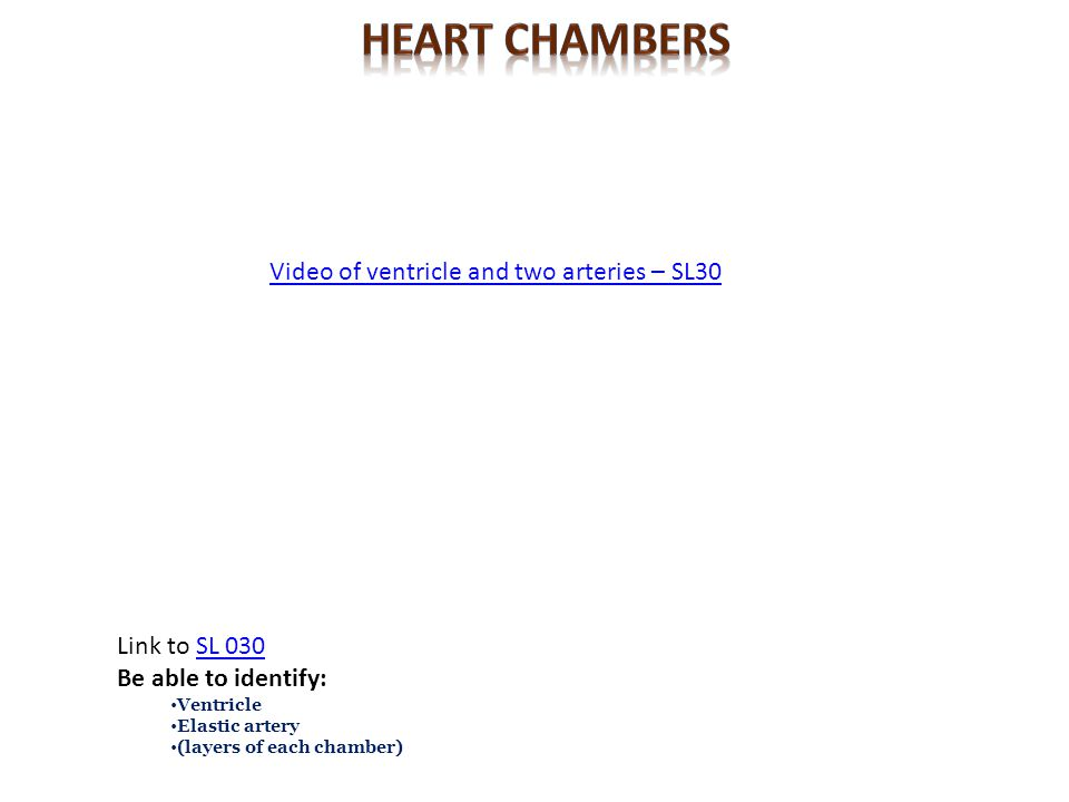 Heart CHambers Video of ventricle and two arteries – SL30