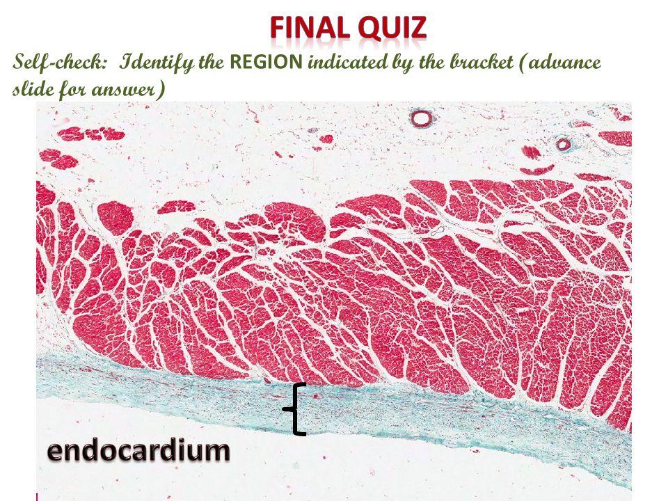 Final quiz endocardium