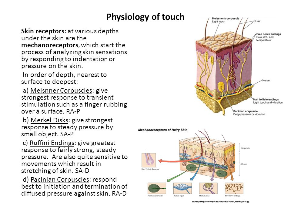 Physiology of touch