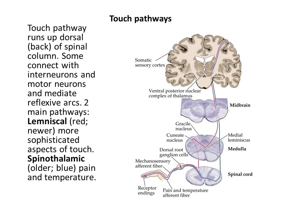Touch pathways