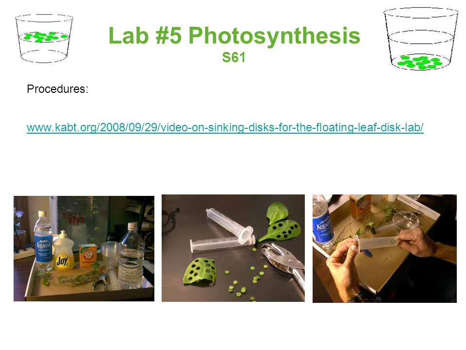 Lab #5 Photosynthesis S61 Procedures: