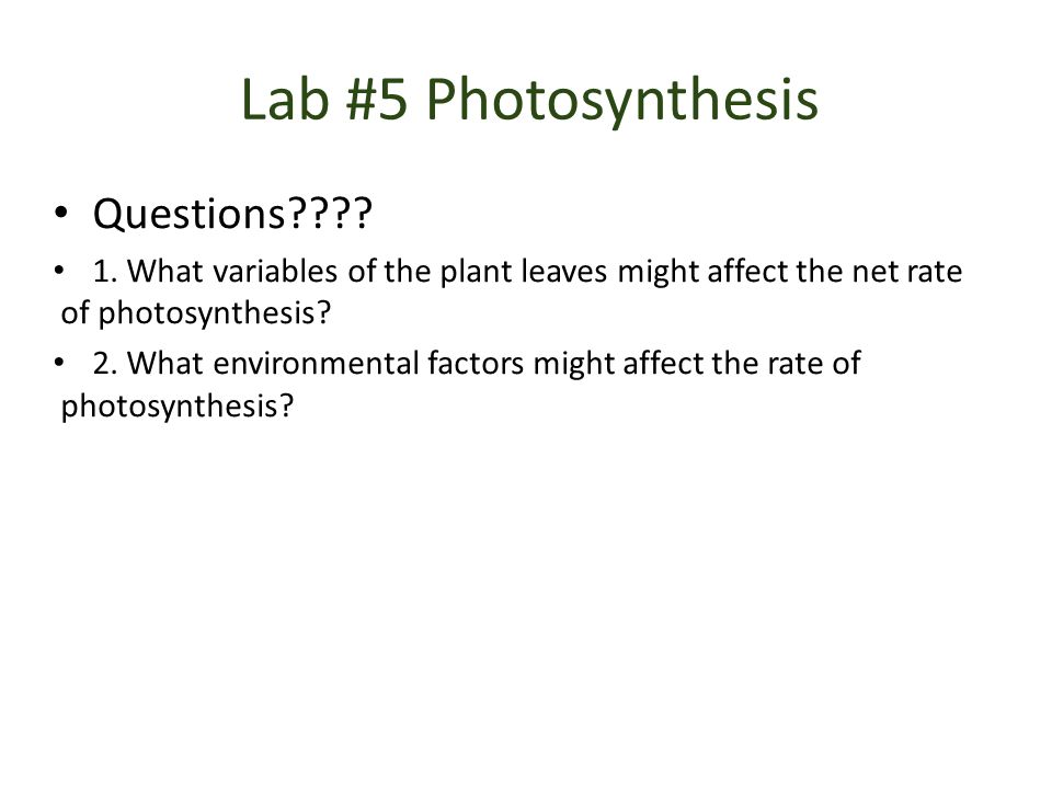 Lab #5 Photosynthesis Questions