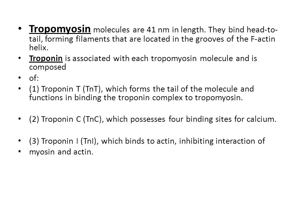 Tropomyosin molecules are 41 nm in length