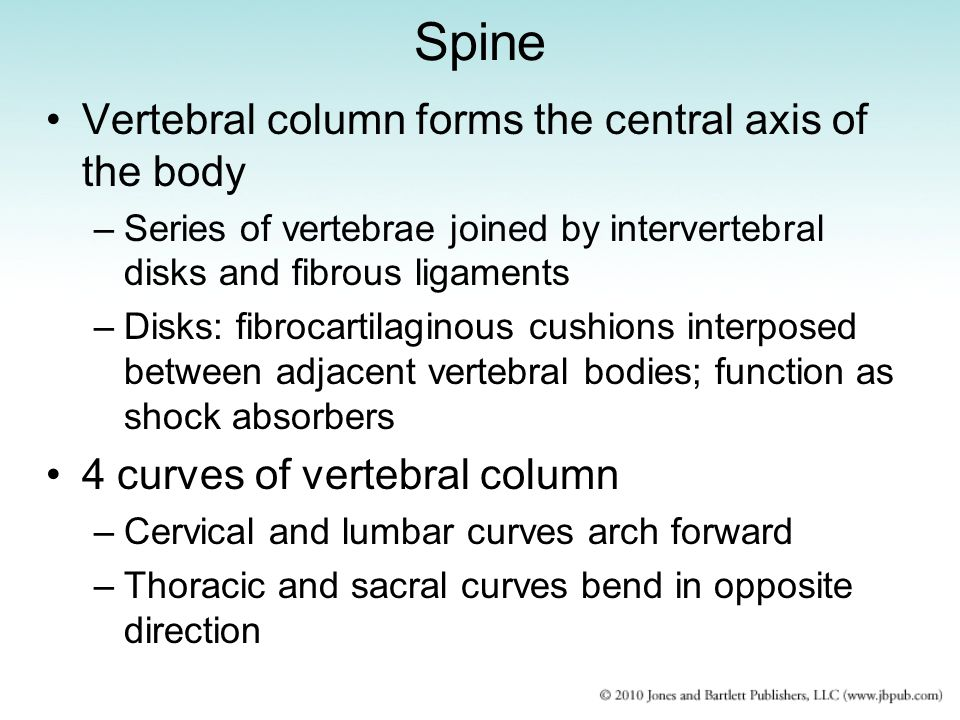 Spine Vertebral column forms the central axis of the body