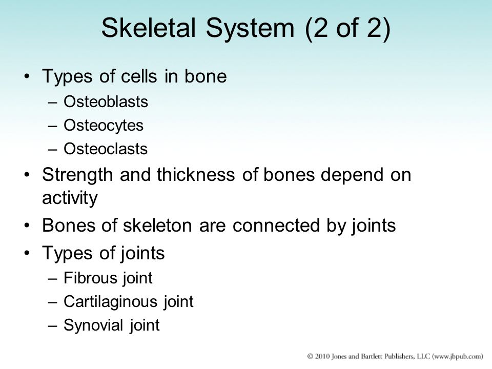 Skeletal System (2 of 2) Types of cells in bone