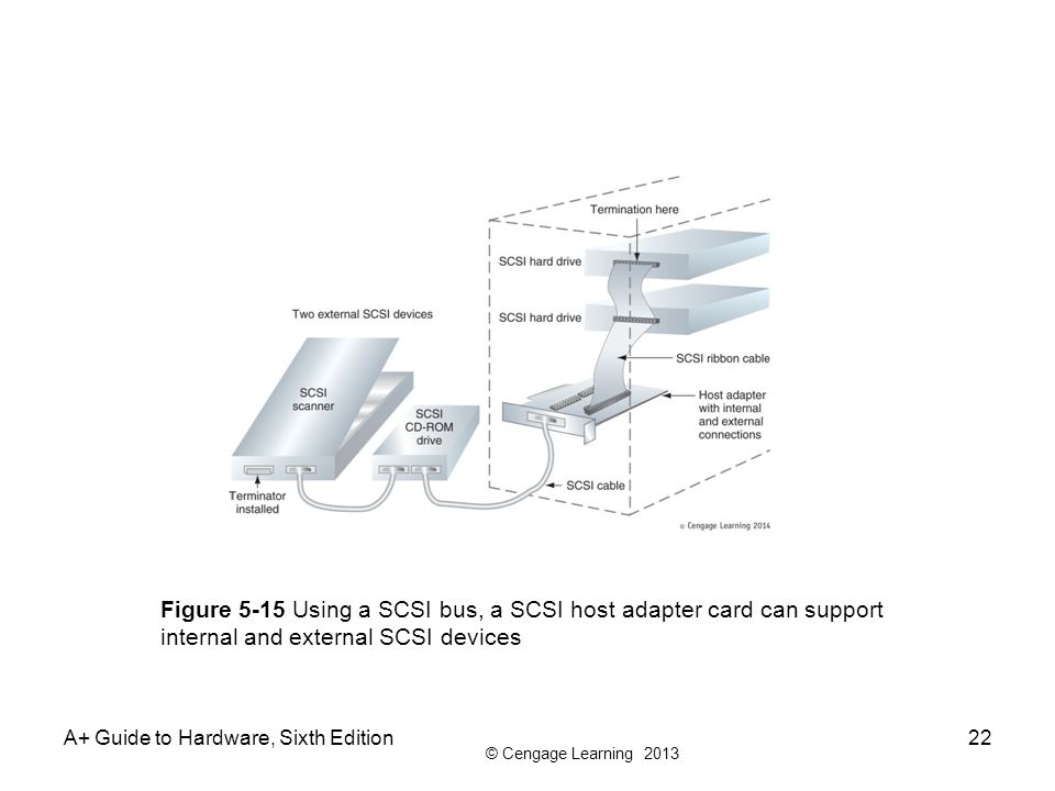Figure 5-15 Using a SCSI bus, a SCSI host adapter card can support internal and external SCSI devices