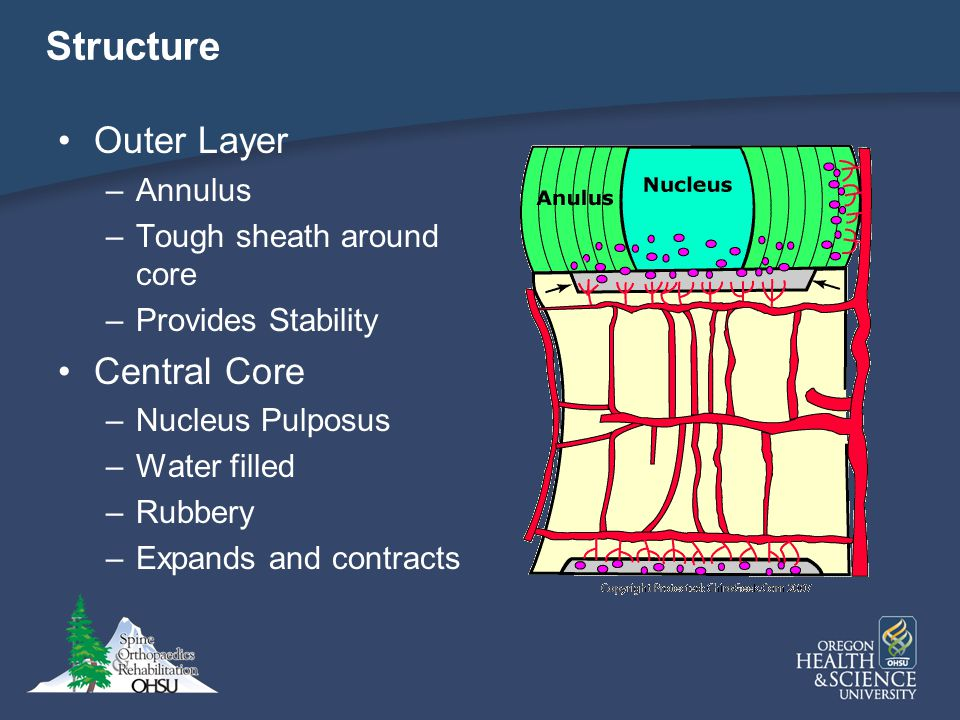 Structure Outer Layer Central Core Annulus Tough sheath around core