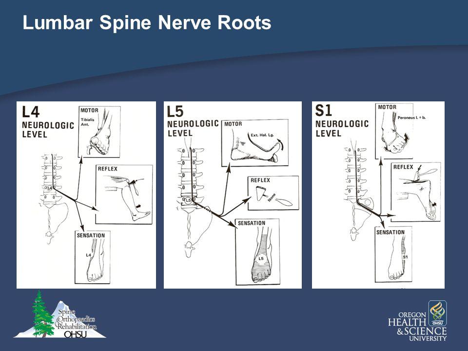 Lumbar Spine Nerve Roots