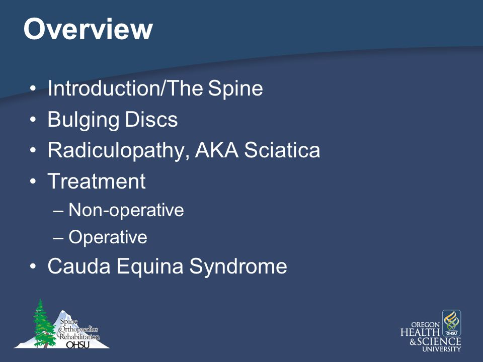 Overview Introduction/The Spine Bulging Discs