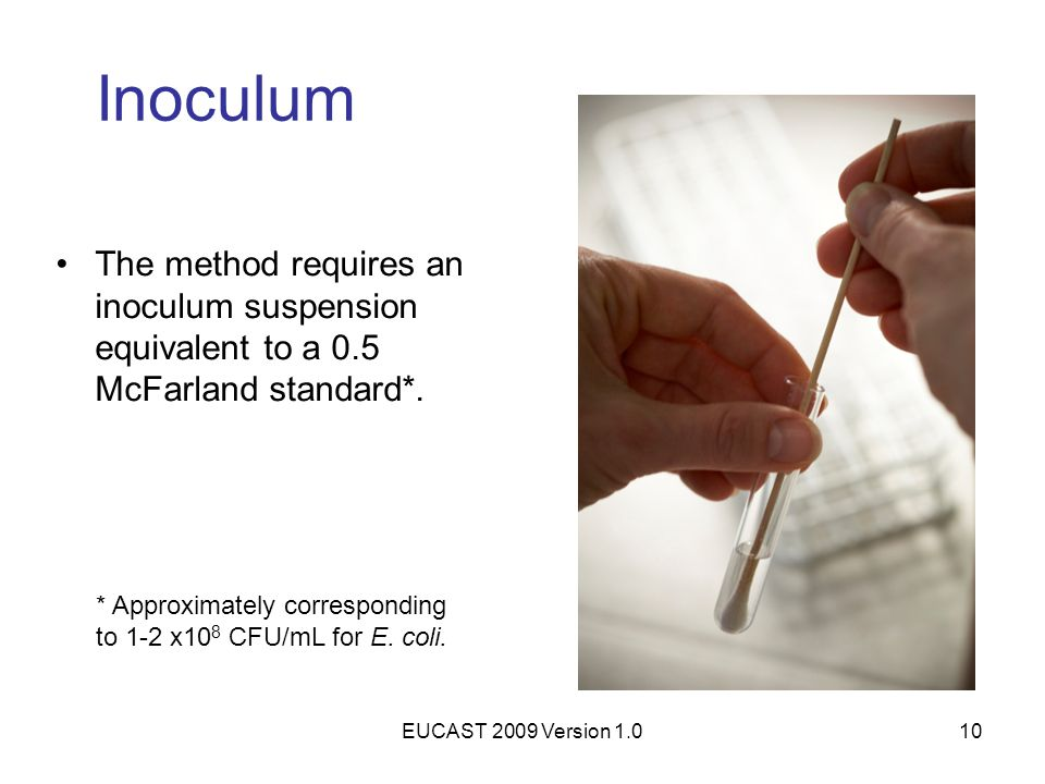Inoculum The method requires an inoculum suspension equivalent to a 0.5 McFarland standard*.