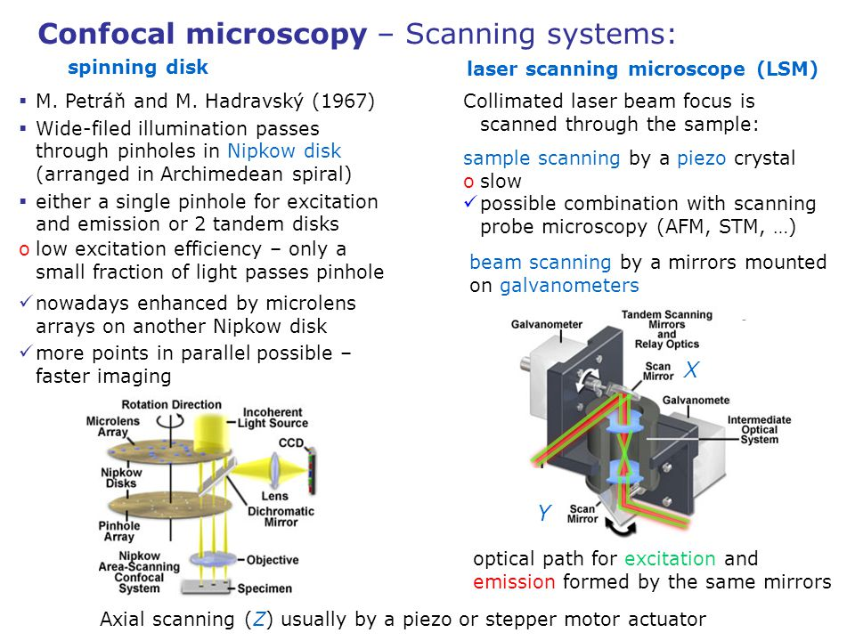 laser scanning microscope (LSM)